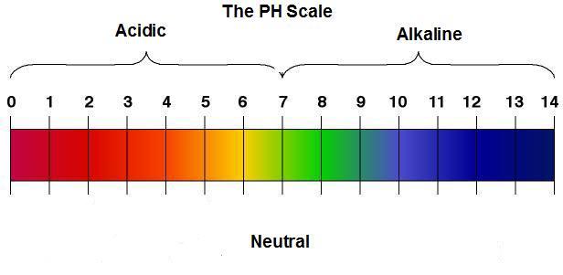 PH-Scale3125510458de479190dd027baaf7a2c2