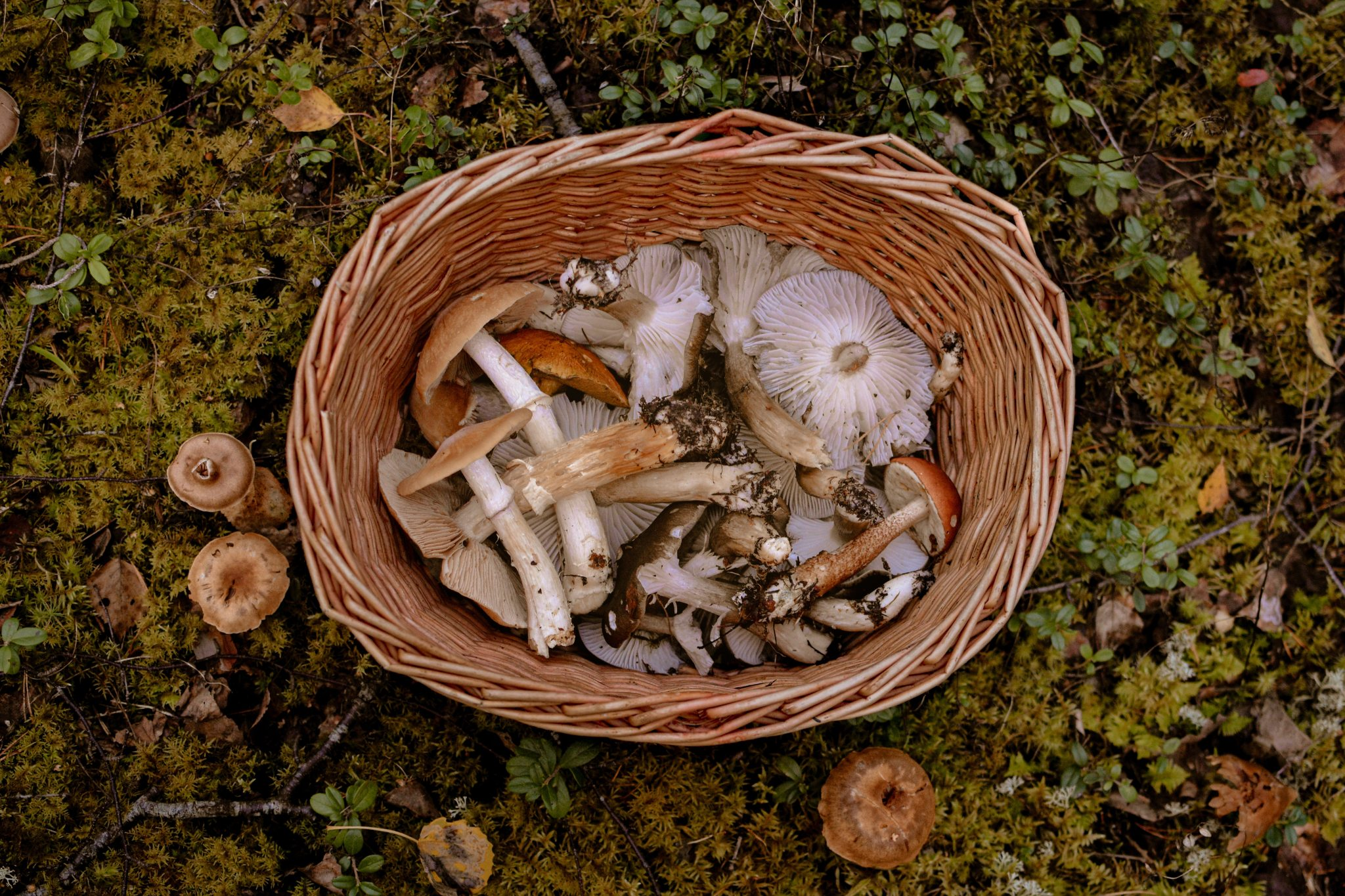 brown-and-white-mushrooms-in-brown-woven-basket-3672955